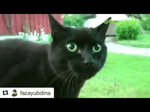 Video Eta Terangkanlah Versi Kucing. Ngakak