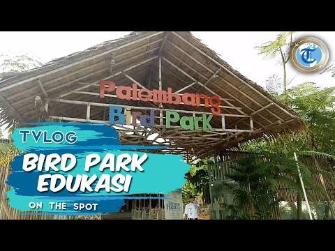 vlog|-bird-park-palembang-wisata-edukasi-anak-anak