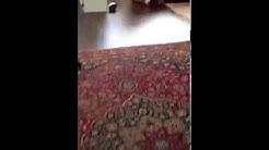 WOOD FLOOR INSTALLERS | FLOOR SRQ SARASOTA FL