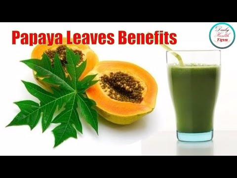 Nine Benefits of Papaya Leaves  (Increases the production of platelets in the blood)