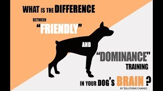 """What Is The Difference Between """"friendly"""" And """"dominance"""" Training In Your Dog's Brain?"""