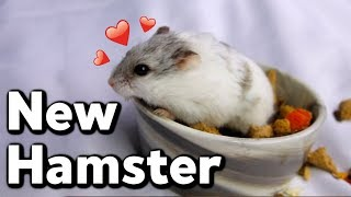 meet-my-new-hamster-i-couldn-t-rescue-because-i-have-snakes