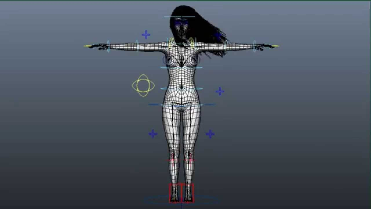 3D Female Anatomy Animation - YouTube