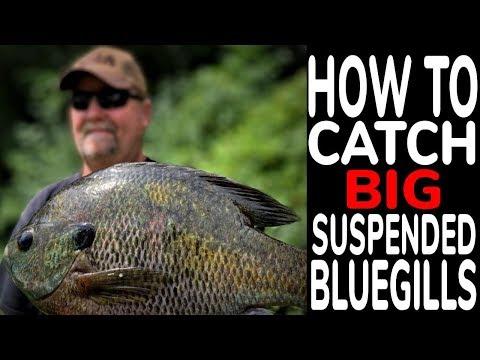 Suspended Bluegills In 70 Feet Of Water - Madison, Wisconsin
