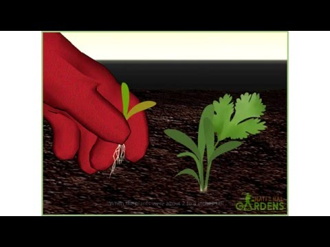 How to Grow Aquatic Plants from Seeds - National Gardens