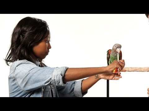 How to Train Your Parrot to Step Up   Parrot Training