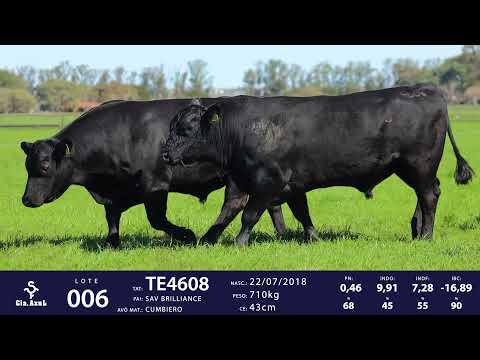 LOTE 06 - TAT TE 4608 e TAT 4900