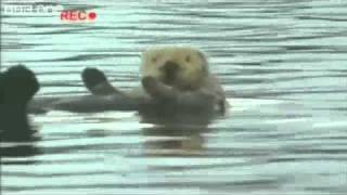 Baixar - Copacabana Otter Bbc One Walk On The Wild Side Grátis