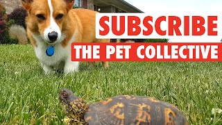 The Pet Collective: Where Pets Rule