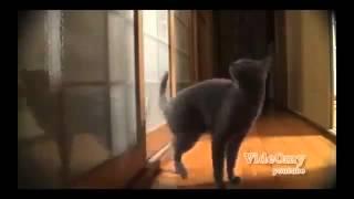 Чудные кошки Прикольная подборка! Funny cats video. Joke!