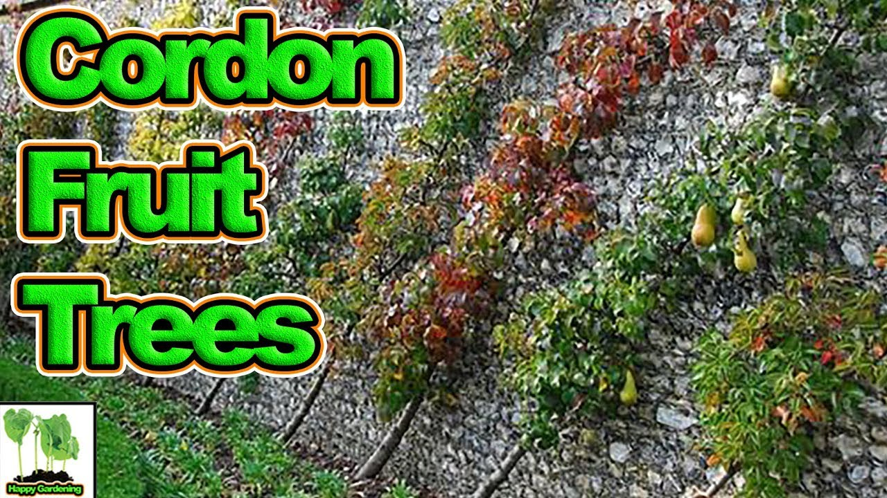 How To Grow Cordon Fruit Trees Complete Guide Youtube