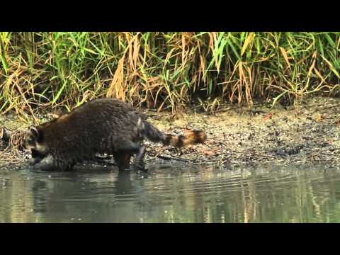 Wildlife on the Wetlands