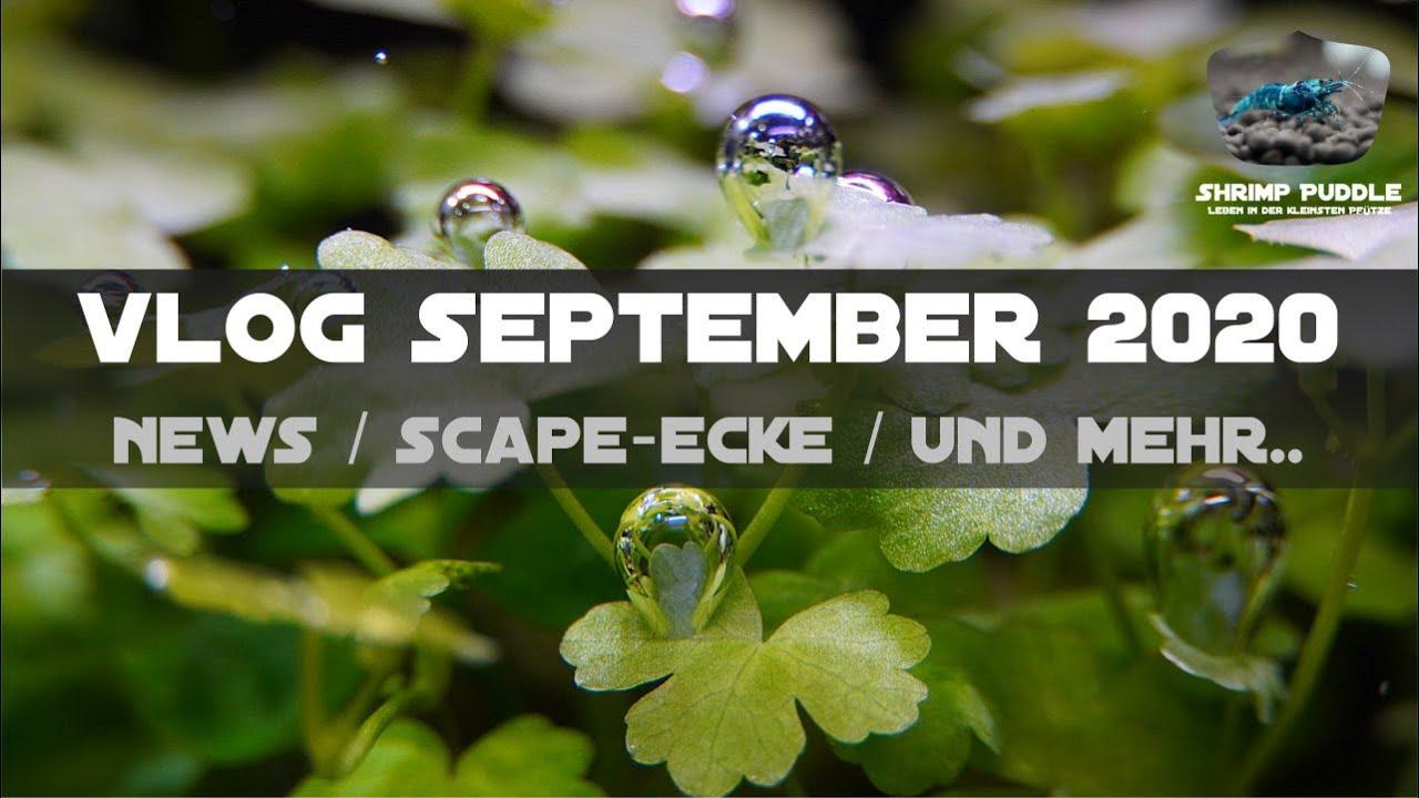 VLOG SEPTEMBER 20 / NEWS / LIVE? / SCAPE-ECKE / UND MEHR..