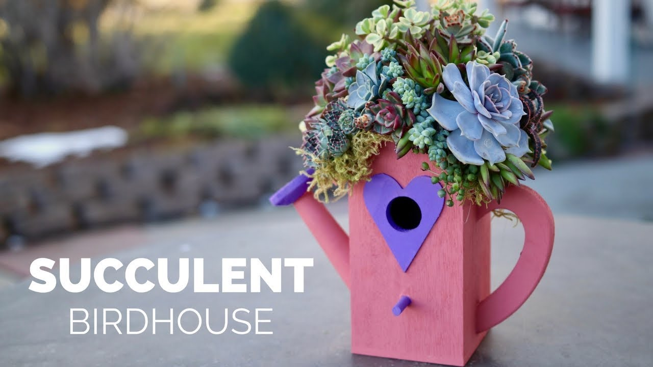 diy-succulent-birdhouse-garden-answer