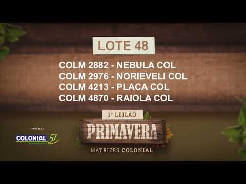 LOTE 48   COLM 2882,2976,4213,4870