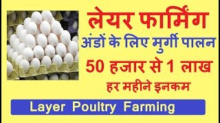 How to Start Layer Poultry Farming Business in India , Egg Production Business In HIndi