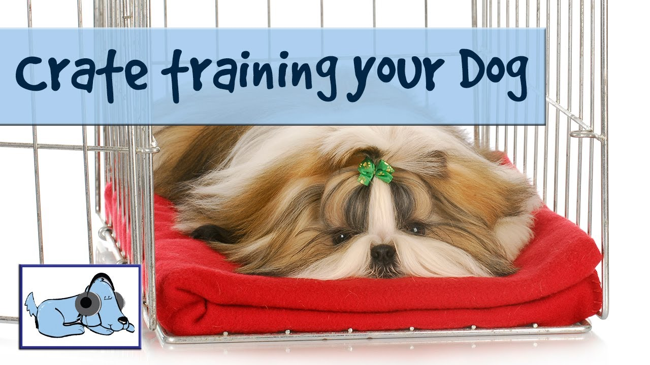 How To Crate Train Your Dog Youtube