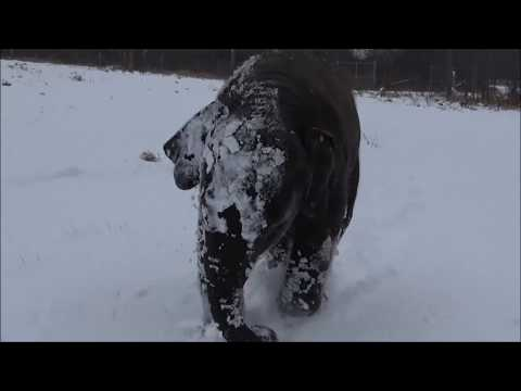 Elephants play in the snow at African Lion Safari