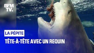 Tête-à-tête avec un requin