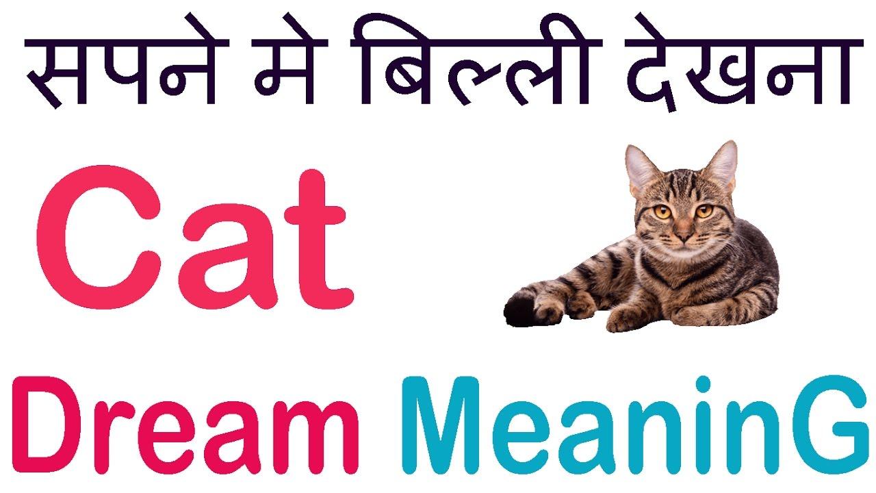 Catdream meaning in hindi catdream meaning in hindi billi ka sapna dekhnacat dream interpretation buycottarizona Gallery