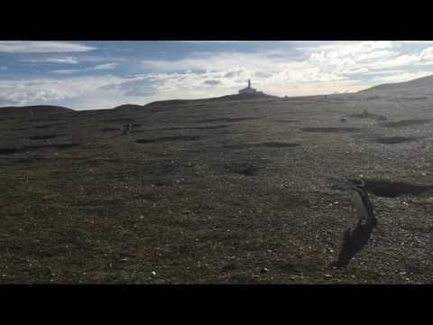 """Monumento Natural """"Los Pingüinos"""" - Isla Magdalena"""