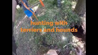 Hunting with hounds and terriers part 1.