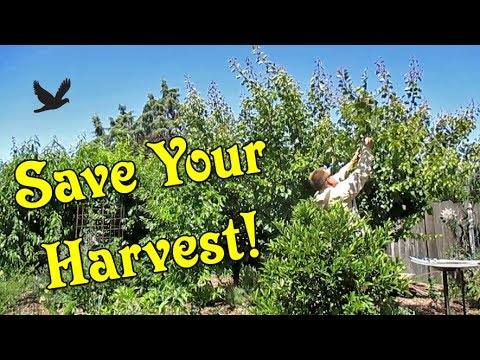 4 Tips To Stop Birds From Eating Your Garden!