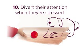 10 Tips to Help Manage Stress in Dogs