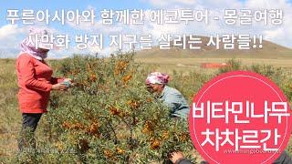 몽골여행 푸른아시아와 함께한 에코투어 황금열매의 비밀을…