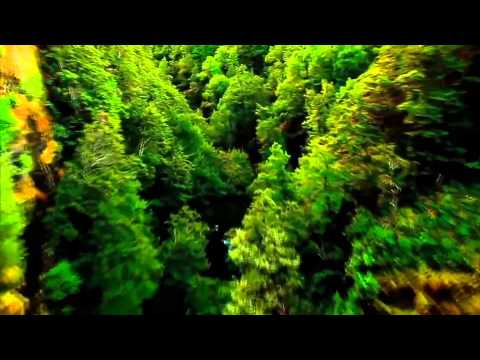 Vellaipookal Ulagam Engum Malarave | Song [HD]