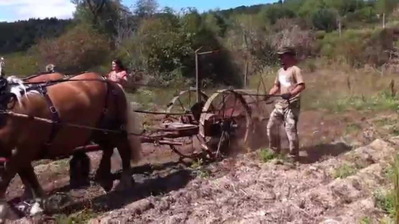 Ramassage des pommes de terre au cheval youtube - Ramassage pomme de terre ...