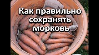 Как правильно сохранять морковь чтобы она не была вялой.