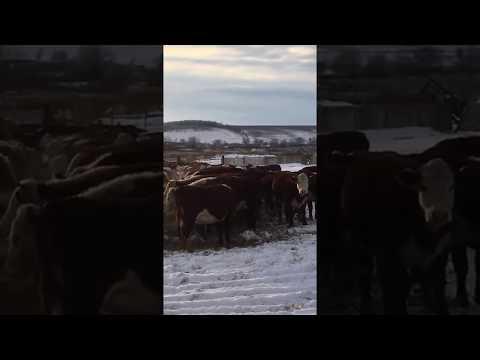 Видео Сбербанк россии 5000 в подарок