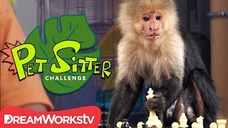 Are You Smarter than a Monkey? | PET SITTER CHALLENGE