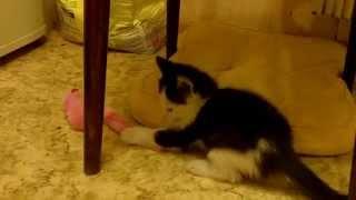 Отдам котенка в хорошие руки (Москва, Королев, Мытищи)