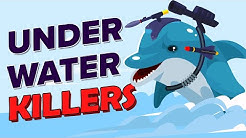 Killer Dolphins Guard Nuclear Navy Base
