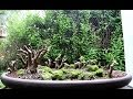 Baobab Style Bonsai Forest, June 2014