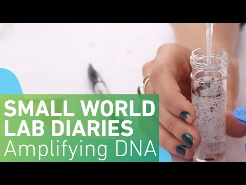 Small World Lab Diaries 6: Amplifying the DNA
