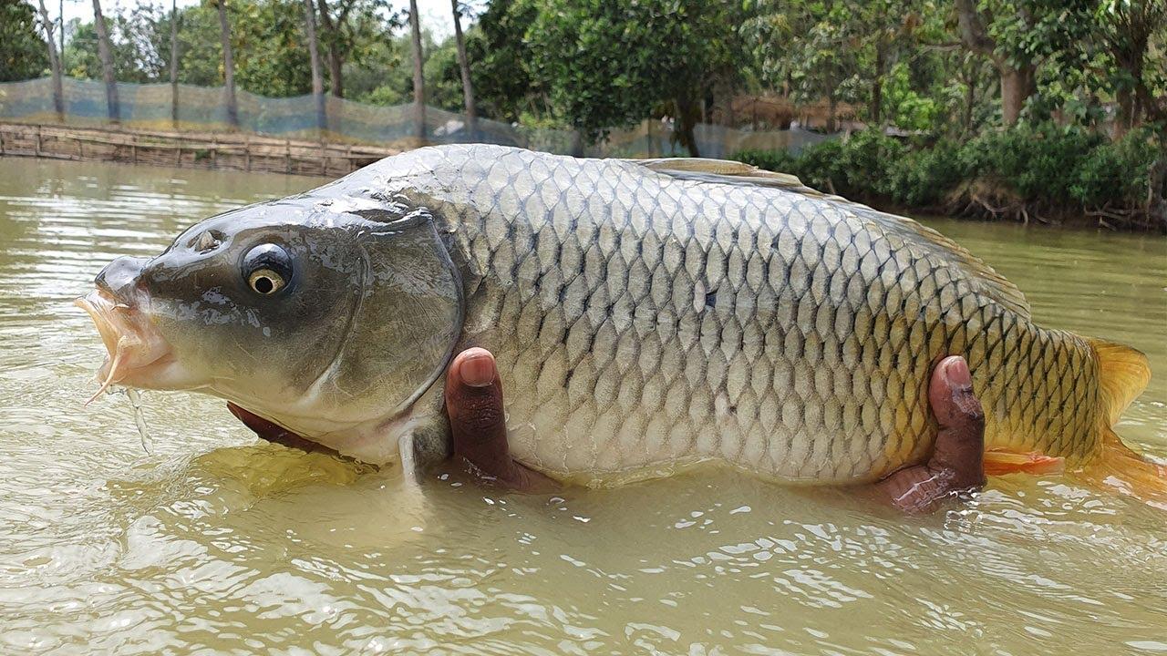 Amazing  Underwater Fishing | Underwater Fishing | Fish Catching