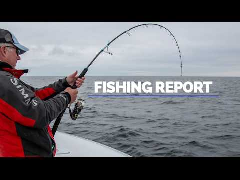 Cape Cod Fishing Report 8/15/19