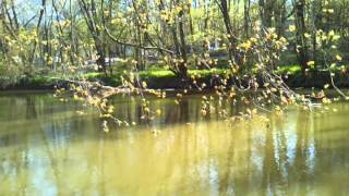 Tuscarawas River in Canal Fulton in the Spring