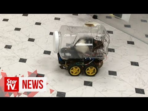 Monica Lowe  - Scientists have trained rats to drive tiny cars to collect food