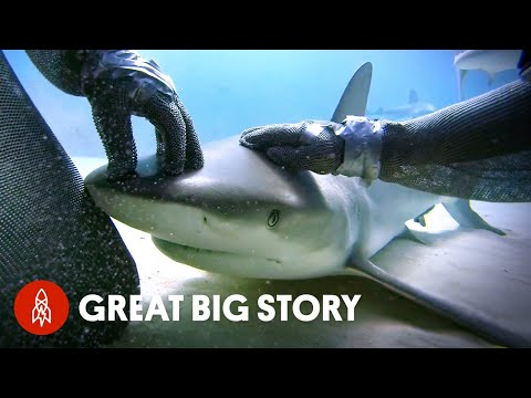 How One Diver Became the Shark Whisperer