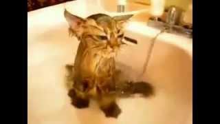 Самые милые котята (Часть 3) / Very sweet kettens (Part 3)
