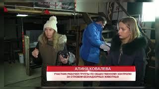 Общественники в Красноярске недовольны работой подрядчика по отлову собак