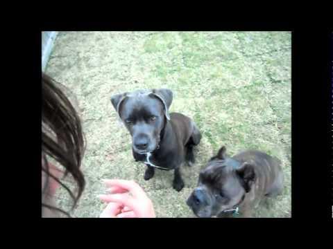 Dog Training Hinesville, Ga.