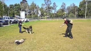Dog Handlers 2     6 9 12