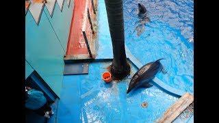 Taiji-Delfine in panischer Angst in einem Delfinarium in China
