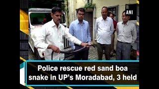 Police rescue red sand boa snake in UP's Moradabad, 3 held - Uttar Pradesh #News