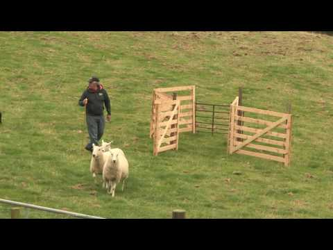 Sheepdog Trial - A Way with Dogs Episode 3